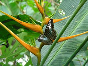Buttefly2