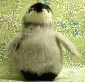 Penguinlookingup